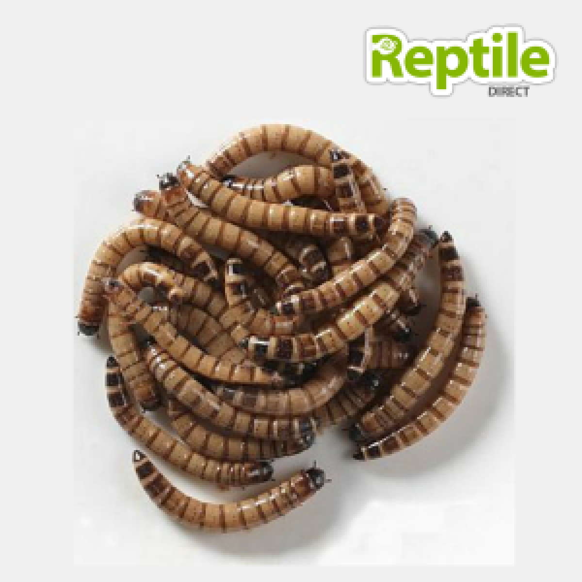 Giant Meal Worms Tub