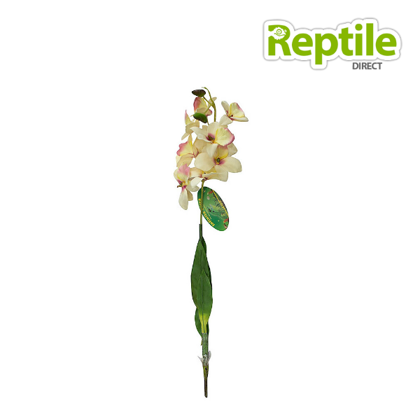 Lucky Reptile Orchid with Stem White