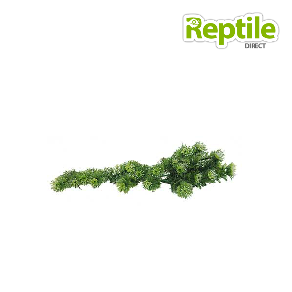Lucky Reptile Turtle Plant: Horn Fern