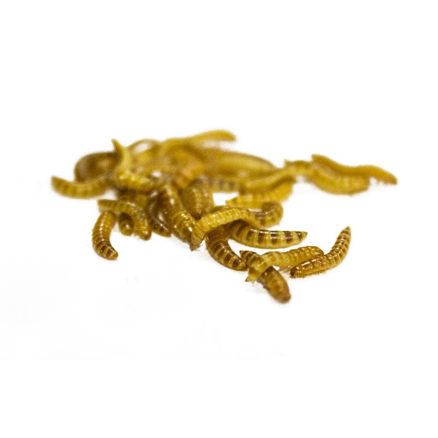 Buffalo Worms (Bag of 500g)