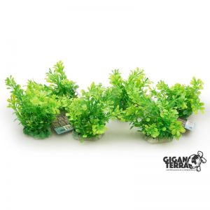 Plant on foot 12 cm - 518