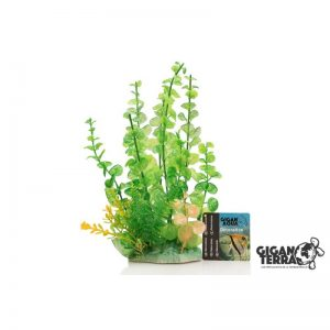 Plant on foot 24 cm  - 550