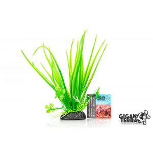 Plant on foot 653 - H 20 CM