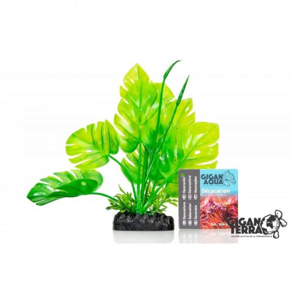 Plant on foot 654 - H 20 CM