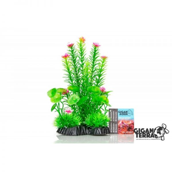 Plant on foot 655 - H 25 CM