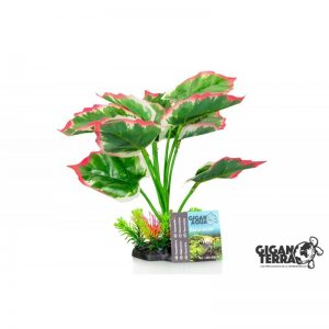 Plant on foot 659 - H 22 CM