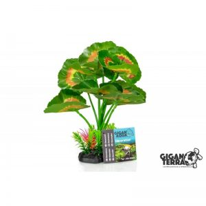 Plant on foot 660 - H 22 CM