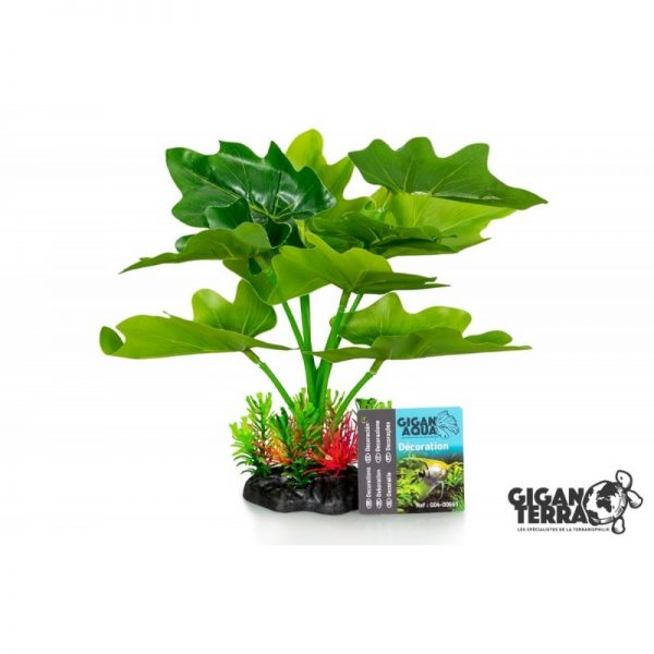 Plant on foot 661 - H 22 CM
