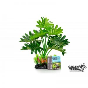 Plant on foot 662 - H 22 CM