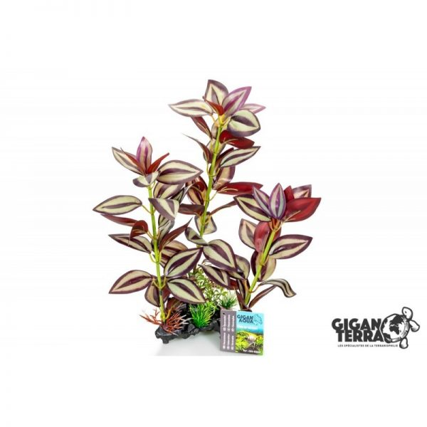 Plant on foot 663 -  H 35 CM