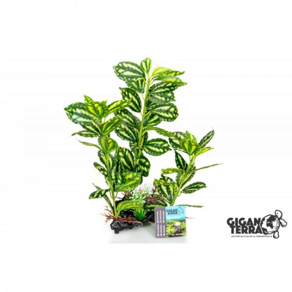 Plant on foot 664 -  H 35 CM