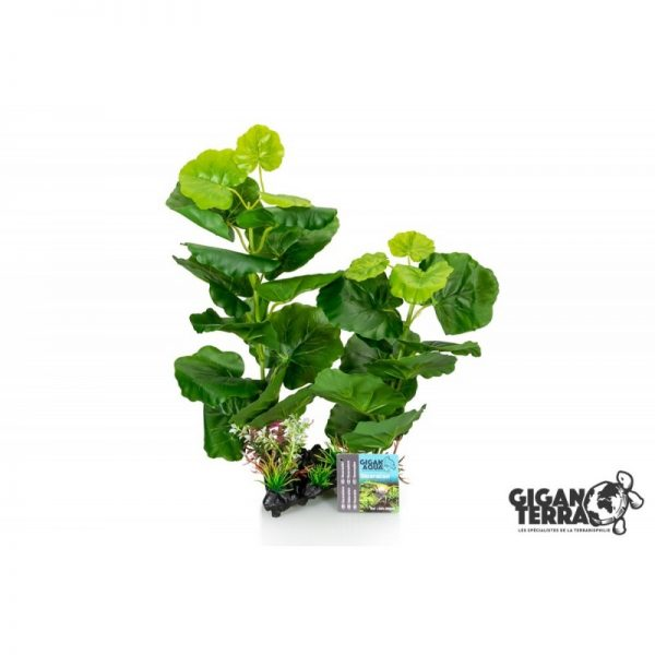 Plant on foot 665 -  H 35 CM