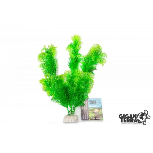 Plant on foot 671 -  H 20 CM