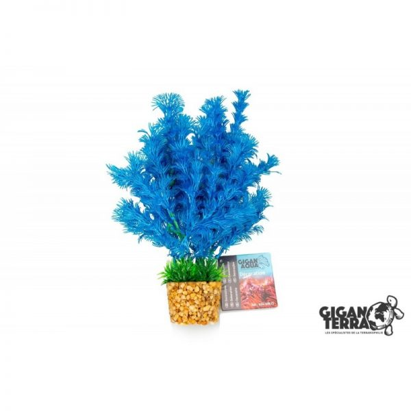 Plant on foot 673 -  H 20 CM