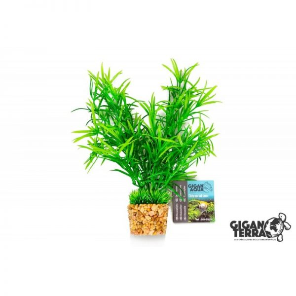 Plant on foot 674 -  H 20 CM